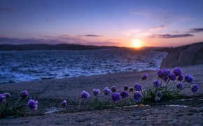 Picture sea, flowers, shore, morning