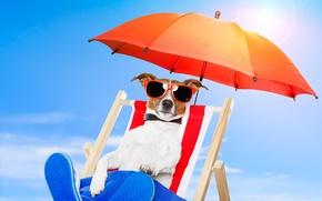 Picture nature, dog, umbrella, glasses, chair, nature, dog, chair, glasses, umbrellas