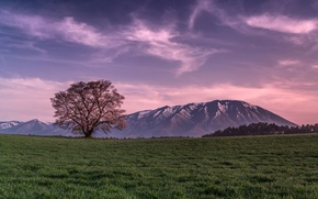 Wallpaper Mountains, tree, pink, the evening, field, the sky, grass, clouds