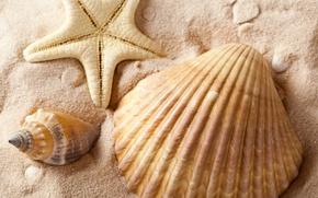 Picture sand, sea, summer, shell, starfish, summer, sea, sand, shells, starfish