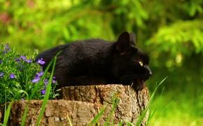 Picture cat, flowers, stump, black cat