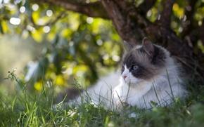 Picture cat, summer, nature