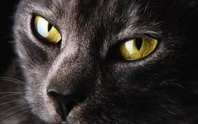 Picture cat, yellow, zenk