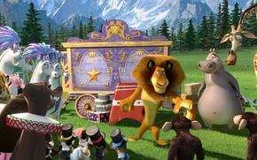 Picture animals, cartoon, circus, MADAGASCAR 3