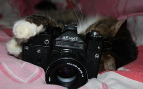 """Picture cat, background, the camera, lens, """"Helios-44M-4"""", """"Zenit"""""""