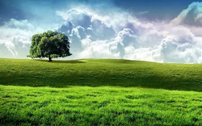 Picture field, the sky, grass, Tree, green