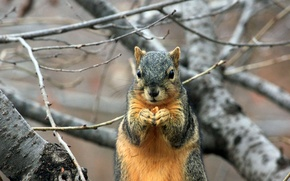 Picture tree, branch, protein, rodent, squirrel