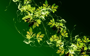 Picture leaves, light, pattern, plant, color, contrast, Liana