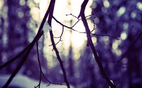 Picture winter, forest, the sun, macro, snow, trees, landscape, branches, nature, glare, tree, branch, silhouette, Blik, …