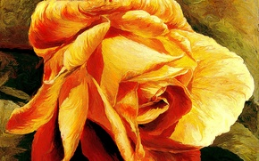 Picture rose, golden, rose, yellow, gold, xsereneix