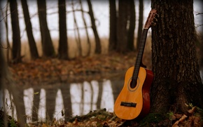 Picture music, tree, guitar