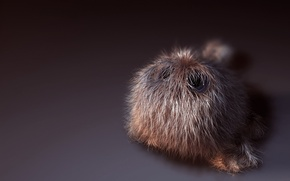 Picture hairy, fluffy, small