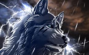 Wallpaper zipper, wolfroad, night, Wolf, rain, art