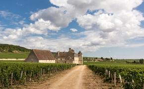Picture wine, France, vineyard, Clos Vougeot, Bourgogne, Burgundy
