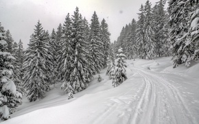 Picture road, forest, snow, Winter, ate, frost, forest, road, nature, winter, snow, frost