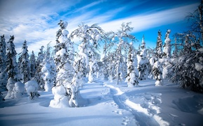 Picture winter, forest, snow, trees, traces, path, Finland, Finland, Lapland, Lapland