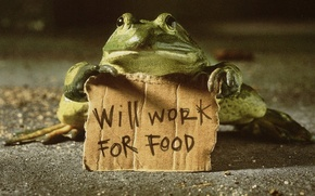 Wallpaper work for food, frog, text