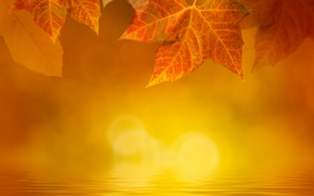 Picture autumn, leaves, water, fog, glare, yellow, maple