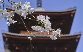 Picture roof, the sky, flowers, branch