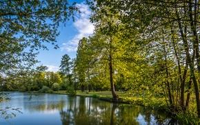 Picture trees, lake, Park, Croatia, benches, Zagreb, Bobovica