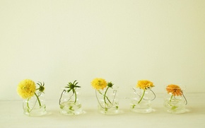 Picture summer, water, flowers, yellow, dandelions, glass