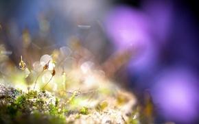 Picture grass, drops, macro
