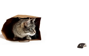 Picture cat, mouse, package