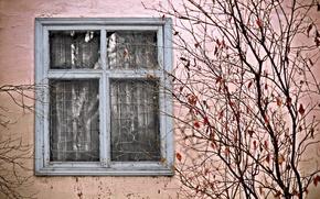 Wallpaper house, Bush, window