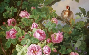Picture flowers, bird, pink roses, goldfinch