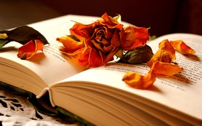 Picture flower, rose, petals, book, dry