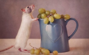 Picture mouse, grapes, mug
