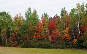Picture Autumn, Trees, Forest, Color, Fall, Autumn, Colors, Forest, Trees