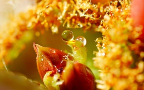 Picture leaves, water, drops, macro