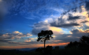 Picture the sky, clouds, sunset, tree, Nature, sky, nature, clouds, tree, national geographic, afternoon
