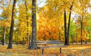 Picture bench, Park, autumn, trees