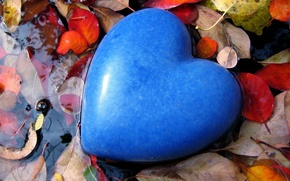 Wallpaper puddle, heart, love, leaves, color, form, water, mood, blue, stone, blue, feelings