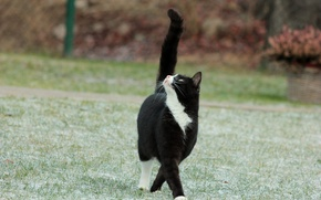 Picture frost, cat, grass, cat, black and white, tail
