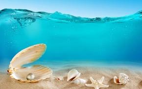 Picture sand, sea, the ocean, the bottom, shell, underwater, ocean, sand, seashells