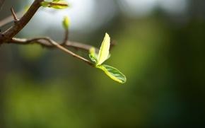 Picture macro, green, background, tree, widescreen, Wallpaper, branch, leaf, wallpaper, leaf, widescreen, background, full screen, HD …