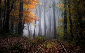 Picture autumn, forest, nature, the way, fog, haze
