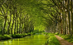 Wallpaper trees, The canal du MIDI. Toulouse, France