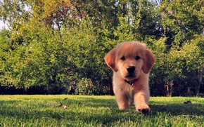 Picture summer, grass, trees, dog, puppy, funny