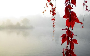 Picture autumn, maple, Calm