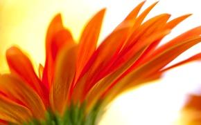 Picture flower, nature, petals, blur
