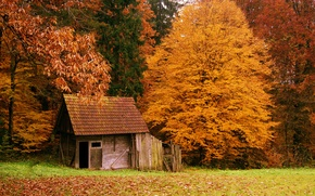 Picture autumn, forest, nature, house