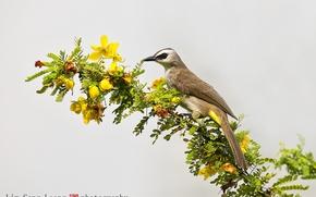 Wallpaper flowers, macro, branch, background, bird