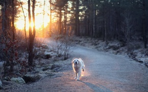 Picture road, light, dog