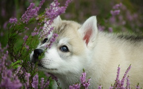 Picture flowers, dog, puppy