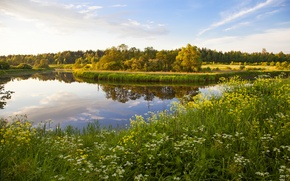 Picture grass, flowers, lake, Russia, of priod, trees., Tver