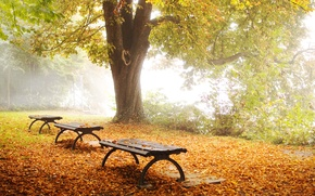 Picture autumn, nature, Park, tree, foliage, shop